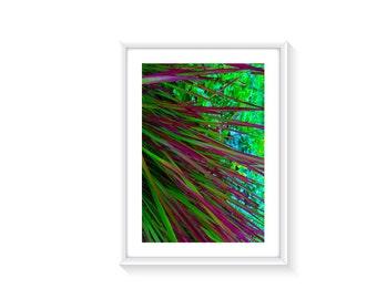 Chinese Grass A4 Art Photo Print