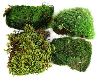 2 sq. ft. Mixed Moss Sheet Cap Rock Mood Pillow Perfect for terrarium vivarium landscape fairy garden etc