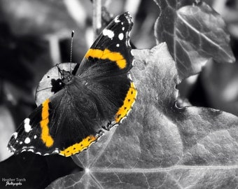 Black White and Orange Butterfly