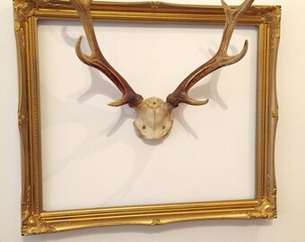 Authentic Deer Antlers
