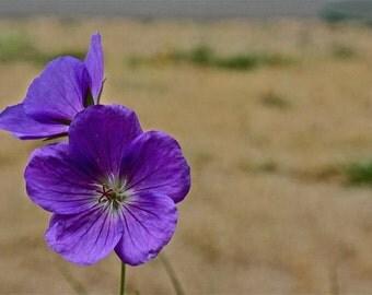 Purple flower print on canvas