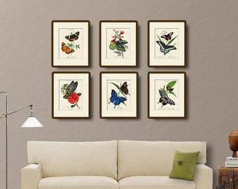 Vintage Butterfly Print Set No. 1, Donovan, Natural History Illustration, Wall Art, Wall Decor, Butterflies, Multiple Sizes