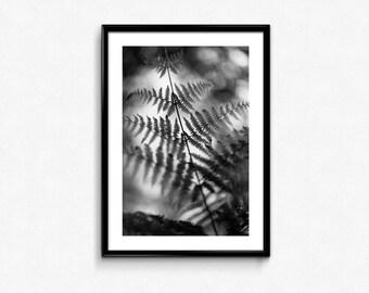 Fern / Nature / France / Black & White