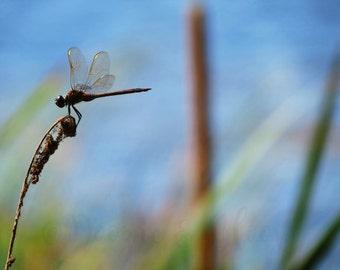 Dragonfly (PRINT)