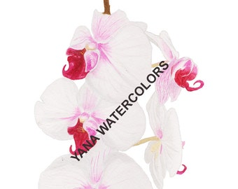 PRINTABLE Art: White Orchid Watercolor Painting
