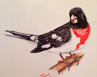 Nature pen sketch - Songbird series
