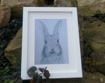 Daisy the Rabbit Fine Art Print