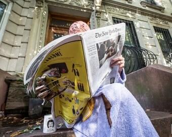 Freddy New York Times