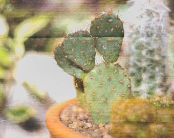 Double Cacti