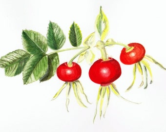 Rose Hips, card blank for your own message.