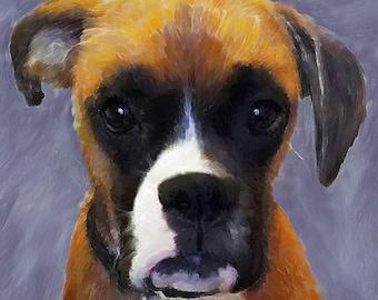 Boxer Dog Portraits