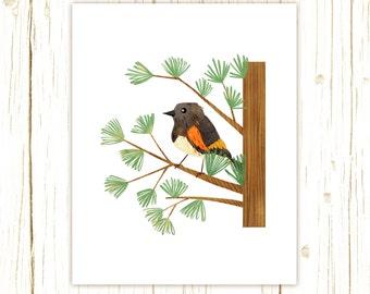American Redstart Print -- bird art --black bird art 52 birds stephanie fizer coleman illustration