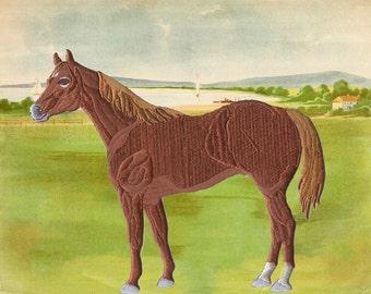 horse applique etsy