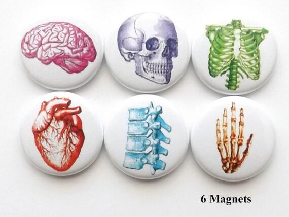 MAGNETS anatomy button fridge doctor nurse gift geek pins party favor stocking stuffers brain skull anatomical heart graduation med student