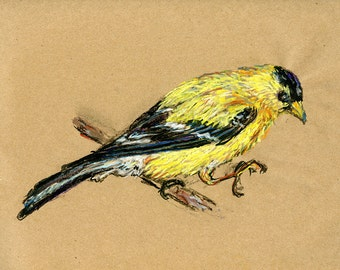 Goldfinch - Original Drawing - Bird Art in Charcoal, Chalk Pastel & Ink