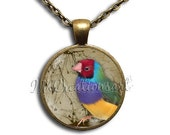 25% OFF - Colorful Finch Glass Dome Pendant or with Chain Link Necklace AN103