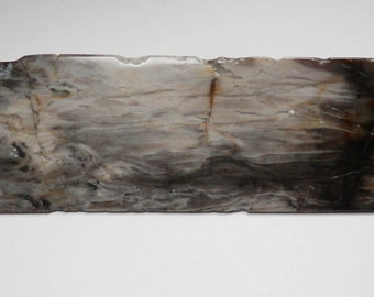 TP-50  Geometric Shape Petrified Wood Decorative Polished Specimen
