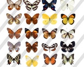 Digital Collage Sheet  Butterflies (Sheet no. O251) Png File Included-Instant Download