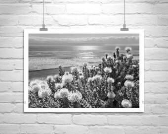 California Coast, Encinitas, Fine Art Photography, California Ocean Art, Sunset Photography, Protea, Seascapes, Coastal Art, Black and White