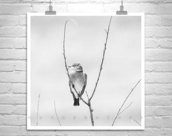 Black and White Bird Art, Square Art, Kingbird Picture, Bird Photography, Minimalist Art, Graceful, Serene, Wall Art Birds, Square Print