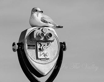 Seagull Photograph, Beach Photography, Bird Photo, Nautical Decor, Beach Decor, Sky Picture, Binoculars, Fine Art Print, Wall Art, Grey