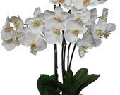 Scented Silk Phalaenopsis Centerpiece