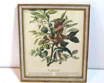 Vintage Bird Print, Ground Dove, Framed Print, Book Page Print, Nature Print
