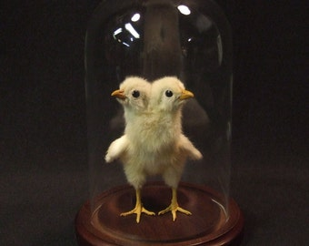 2-HEADED CHICK Pedigreed Rogue Taxidermy created by the person who put it on the map