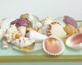 "Seashells - Colorful Shell Mix - 1 cup (30-35 pcs.) 1"" - 2"" - Beach Weddings - Beach Parties - Beach Table Decor - Bulk Shells"