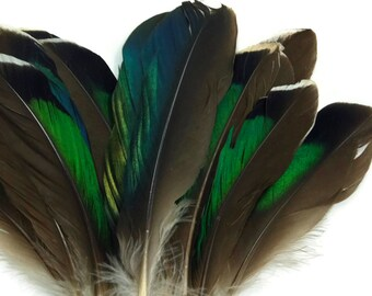 USA Real Feathers, 10 Pieces - Iridescent Green Mallard Duck Wing feathers : 3358