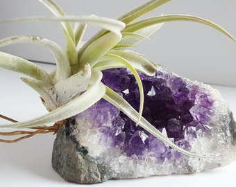 Air Plant on Amethyst Crystal Geode Chunk, Crystal Garden, Spiritual Gift For Gardener, Naturalist, Ready To Ship