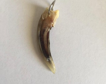 Badger claw pendant