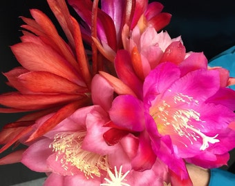 Three Miscellaneous Epiphyllum Orchid Cactus Cutting