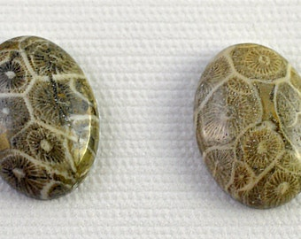 Gray fossil coral oval cabochon, 18x25mm - #1762