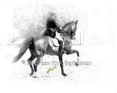 Dressage Horse fine art equine photograph black and white bay show horse 16 x 20 large giclee print velvet watercolor paper FastWinn