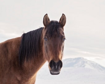 Brown Bay Horse in Winter Mountains, Color Horse Photography