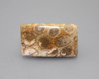 Fossilised Coral Rectangular Cabochon