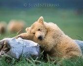 Sleepy Bear Photo Print , Animal Photograph, Wildlife Photography, Wall Decor, Nursery Art, Boys Room, Safari Nursery Art, Green, Girls Room