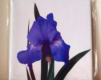 Ceramic tile Iris 'Sea Master', ONE decorative wall tile, floral tile, blue flower, summer garden, floral photograph 1294