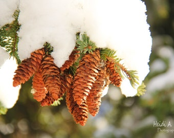 Blank note card, greeting card, photo notecard, photo card, Winter note card,  note card, Winter photography, Snow print, Pinecones, nature