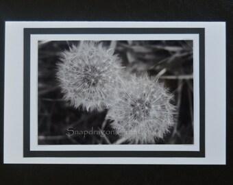 Photo Greeting Card, Dandelions in Black & White, Blank Inside