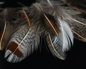 Real Bird Feathers Partridge Natural Feathers for Crafts Brown Gray Craft Feather Small Bird Feathers Plumes Scrapbooking   Millinery, 24