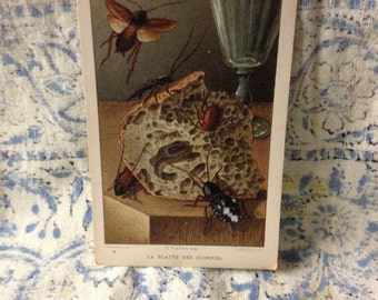 beetle learning card la  blatte des cuisines vintage flashcard school french insect learning bug