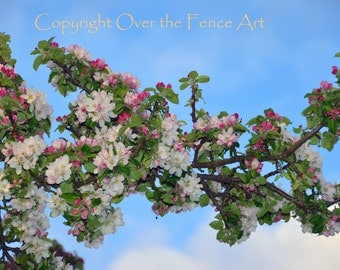 Flower Photography Apple Blossoms Greeting Card