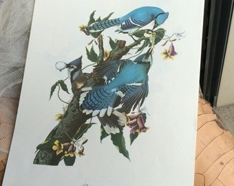 A Collection Of Vintage Birds Prints To Frame Or Admire