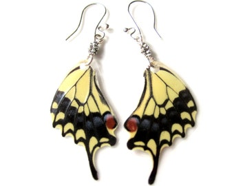 Yellow Butterfly Earrings with Silver Beads, Real Butterfly Wing Earrings, Eastern Tiger Swallowtail