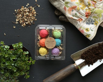 Organic Salad in Provence Mix Seed Bomb  Rainbow Seed Bomb  Indoor Garden Gift  Mothers Day Gift