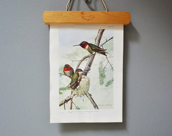 Vintage Bird Book Plate - Ruby Throated Hummingbird - 1940s