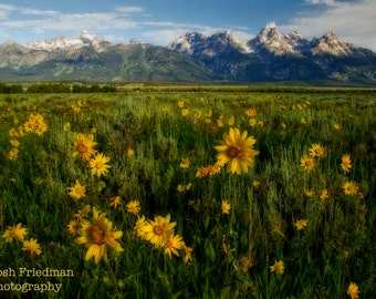 Wildflowers and Grand Teton Mountains Landscape Photography Jackson Hole Wyoming Antelope Flats Fine Art Photograph Summer Yellow Green