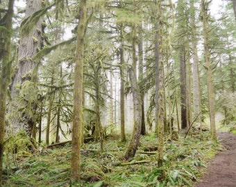 Woodland Photography Print 11x14 Fine Art Oregon Pacific Northwest Forest Trail Wilderness Spring Landscape Photography Print.